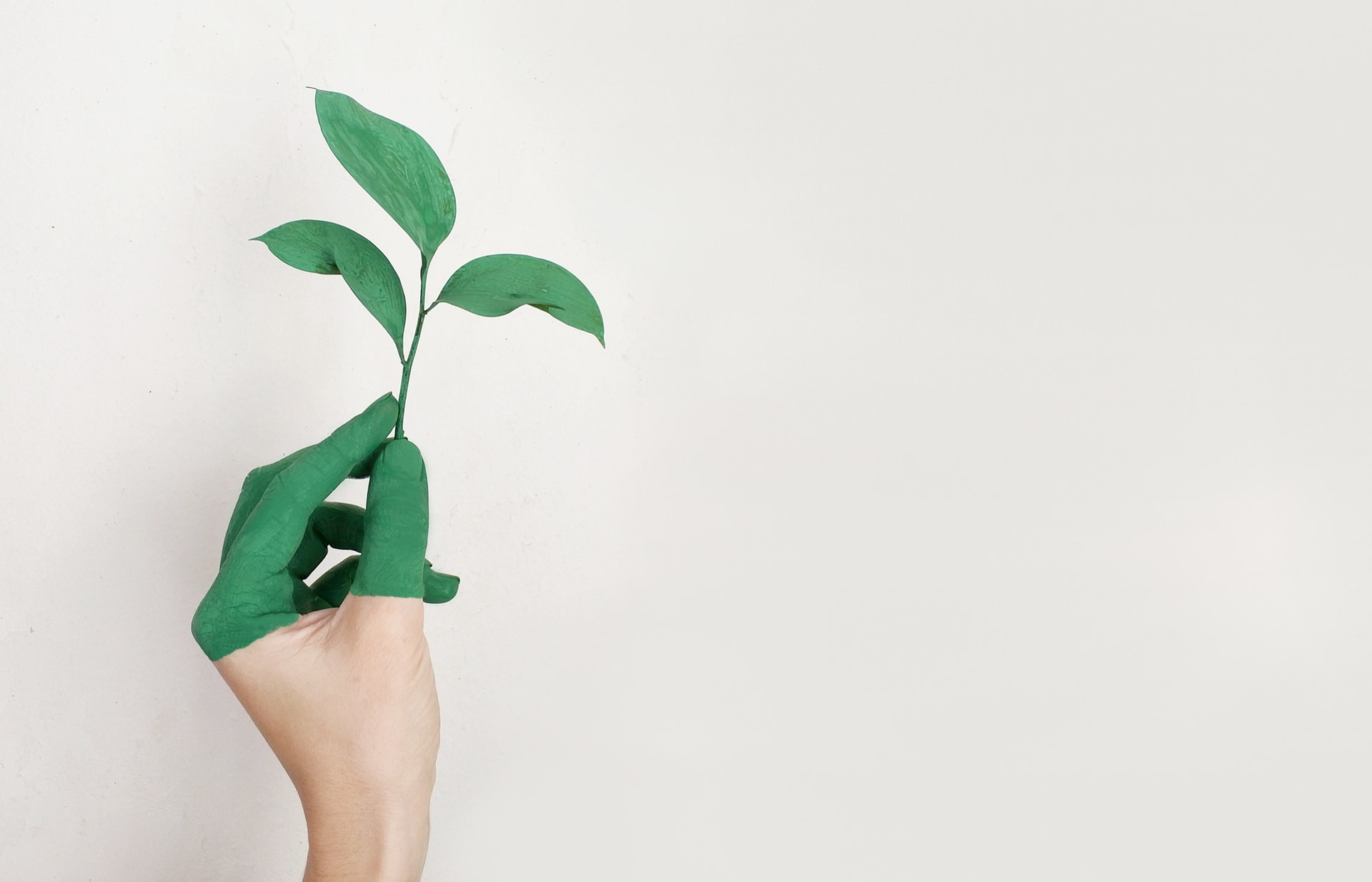 Hand dipped in green paint holds a plant sprig against white background